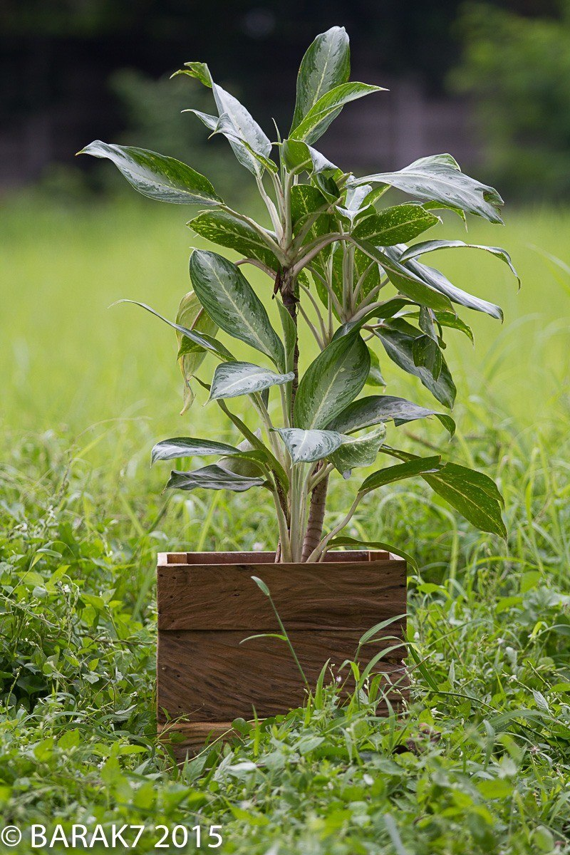 Flower pot botany urban jungle in recycled teak wood - 6